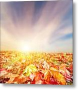 Autumn Fall Landscape Metal Print