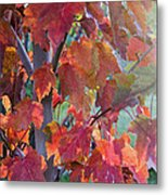Autumn Flame Metal Print by Dana Moyer