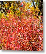 Autumn Flames Metal Print