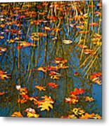 Autumn  Floating Metal Print by Peggy Franz