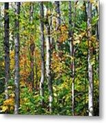 Autumn Forest Detail Metal Print