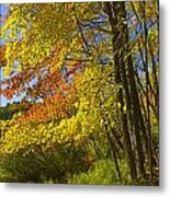 Autumn Forest Scene In West Michigan Metal Print