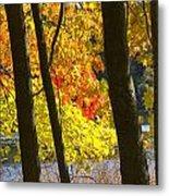 Autumn Forest Scene Metal Print