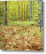 Autumn Forest - White Mountains New Hampshire Metal Print