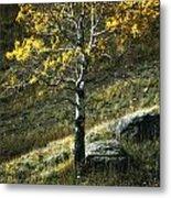 Autumn Glow - Yellowstone Metal Print