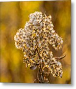 Autumn Goldenrod And A Poser Metal Print