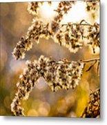 Autumn Goldenrod  Metal Print