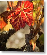 Autumn Grape Leaves Metal Print