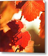 Autumn Grapevine Leaves Metal Print by Charmian Vistaunet