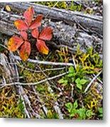 Autumn Highlights Metal Print