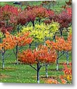 Autumn Hillside Orchard Metal Print