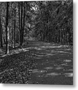 Autumn In Black And White Metal Print