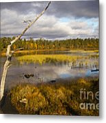 Autumn In Finland Near Inari Metal Print