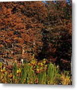 Autumn In Gruene Metal Print
