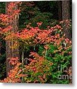 Autumn In Mount Rainier Forest Metal Print