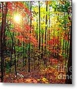 Autumn In South Carolina Metal Print