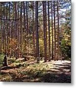 Autumn In The Pines Metal Print