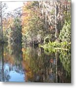 Autumn In A Swamp Metal Print