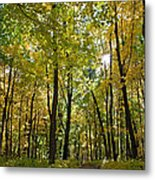 Autumn In Uw Arboretum In Madison Wisconsin Metal Print by Natural Focal Point Photography