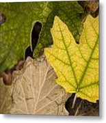 Autumn Is Coming 1 Metal Print
