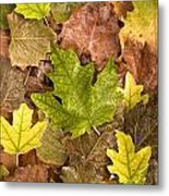 autumn is coming 5 - A carpet of autumn color leaves  Metal Print