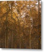 Autumn Larch Metal Print