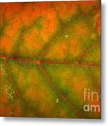 Autumn Leaf Texture Metal Print