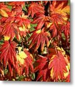Autumn Leaves 07 Metal Print