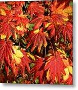 Autumn Leaves 08 Metal Print
