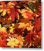 Autumn Leaves 09 Metal Print