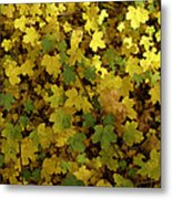 Autumn Leaves 091 Metal Print