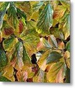 Autumn Leaves 79 Metal Print