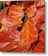 Autumn Leaves 80 Metal Print