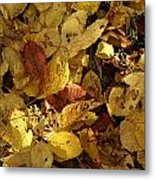 Autumn Leaves 94 Metal Print