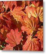 Autumn Leaves 98 Metal Print