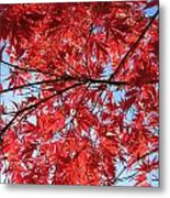 Autumn Leaves And Blue Sky Metal Print