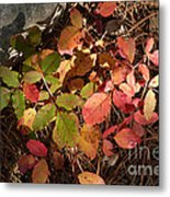 Autumn Leaves And Needles Metal Print