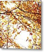 Autumn Leaves Metal Print by Blink Images