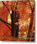 Autumn Leaves Metal Print by Carol Groenen