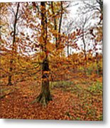 Autumn Leaves Common Wood  Metal Print