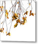 Autumn Leaves Hanging From Branch Metal Print