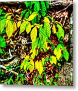 Autumn Leaves In Green And Yellow Metal Print