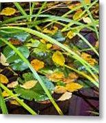 Autumn Leaves In Pond Metal Print