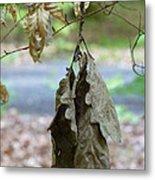 Autumn Leaves In Summer Metal Print