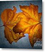 Autumn Leaves On Blue Metal Print