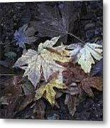 Autumn Leaves Submerged In Pescadero Creek Metal Print