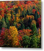 Autumn Leaves Vermont Usa Metal Print