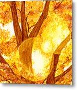 Autumn Light Metal Print