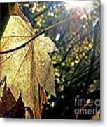 Autumn Light On Leaf Metal Print