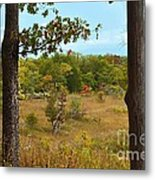 Autumn Look Out Metal Print